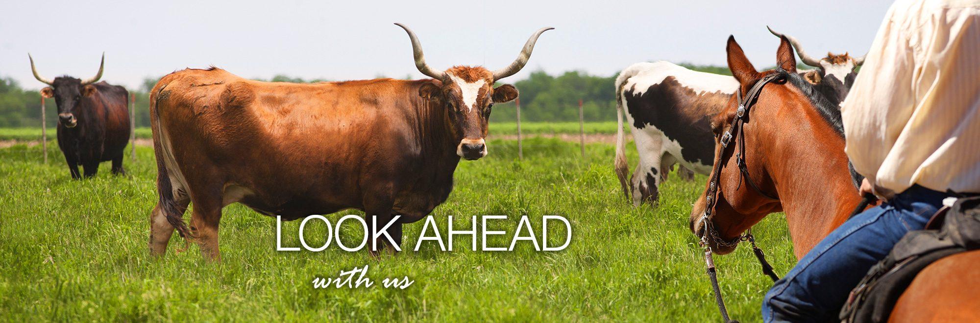 2016 Ranch Look Ahead